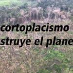 La Amazonia, el cortoplacismo y la destrucción del mundo y el ser humano